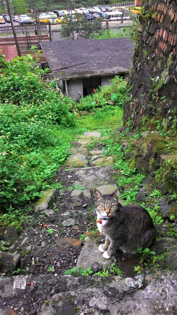 台湾の猫村のホウトンの睨む猫の写真