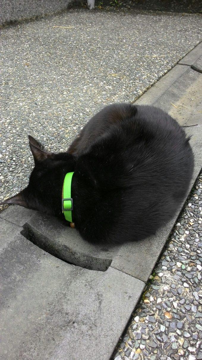 台湾の猫村のホウトンの丸くなって寝る黒猫の写真