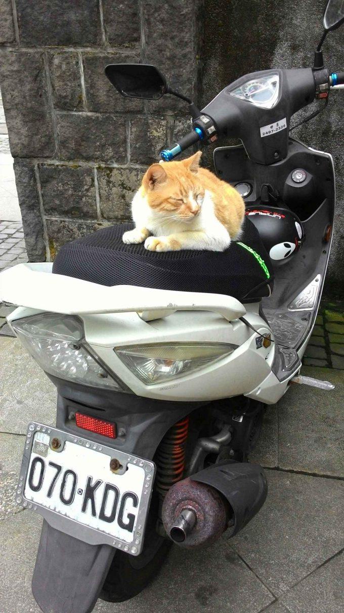 バイクの上で寝る台湾の猫村のホウトンの猫の写真
