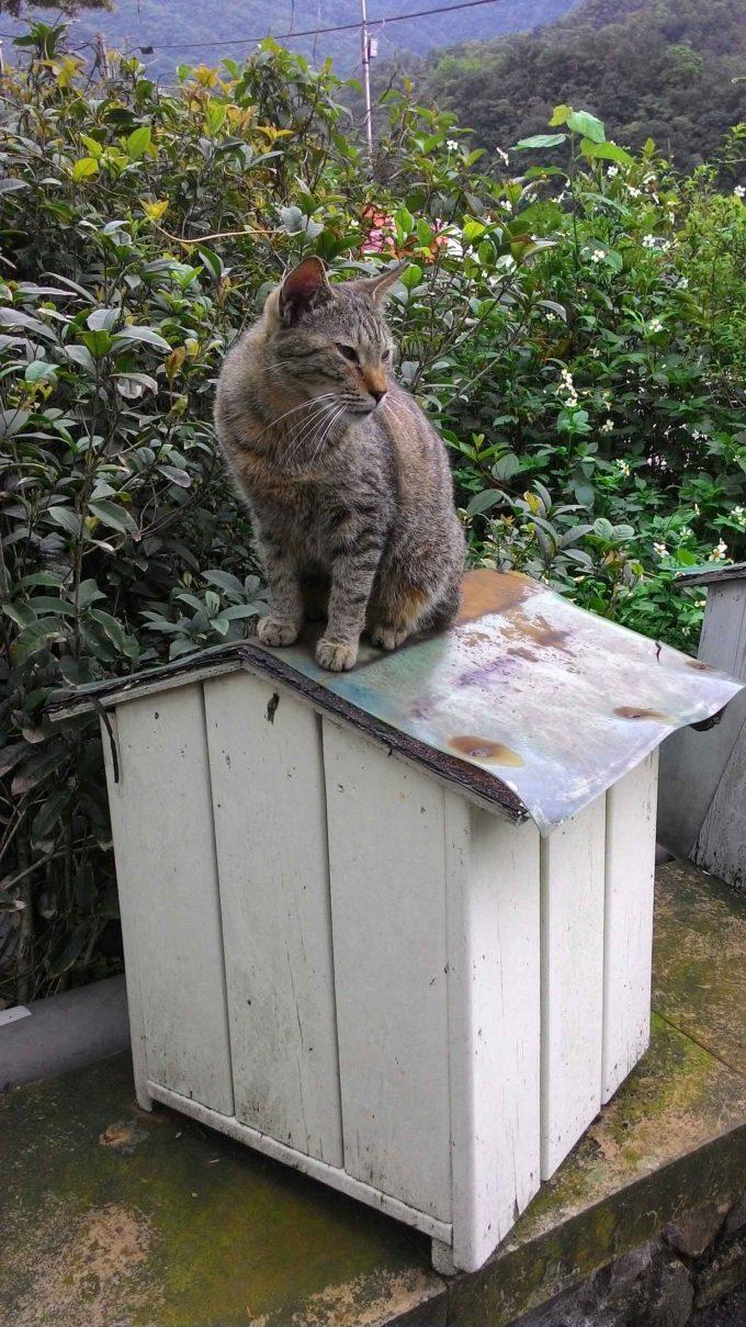 台湾の猫村のホウトンの屋根でたたずむ猫の写真