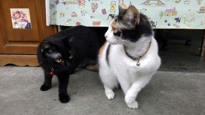 台湾の猫村のホウトンの猫の写真