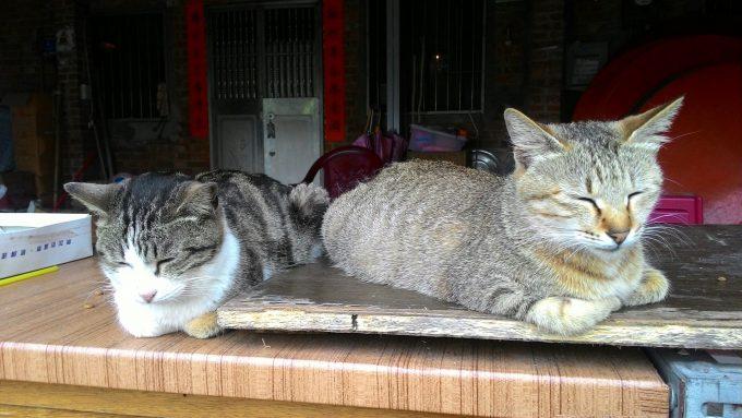 台湾の猫村のホウトンのたたずむ猫の写真