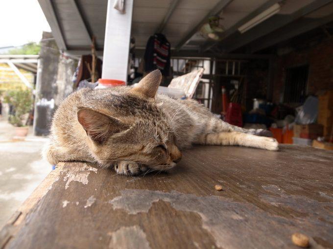台湾の猫村のホウトンのくつろぐ猫の写真