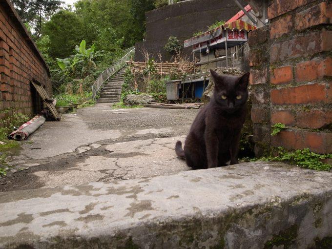 台湾の猫村のホウトンの黒猫の写真