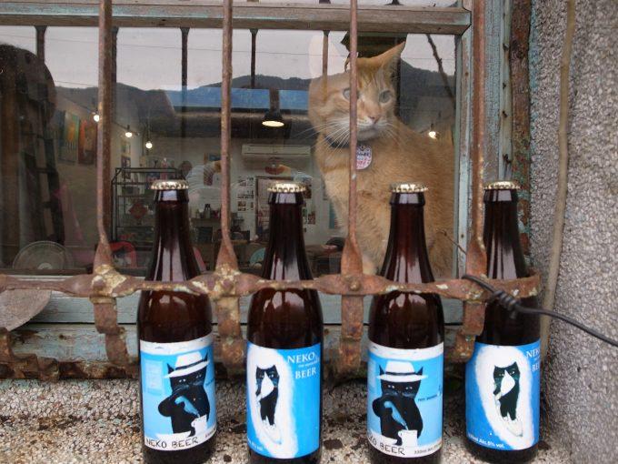 台湾の猫村のホウトンの店猫の写真