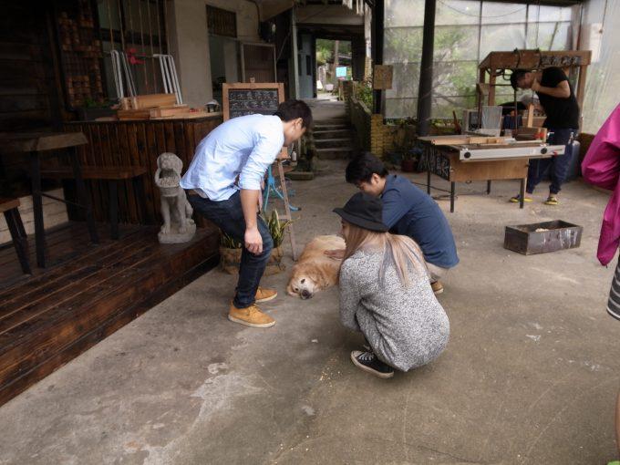 台湾の猫村のホウトンの要求する犬の写真
