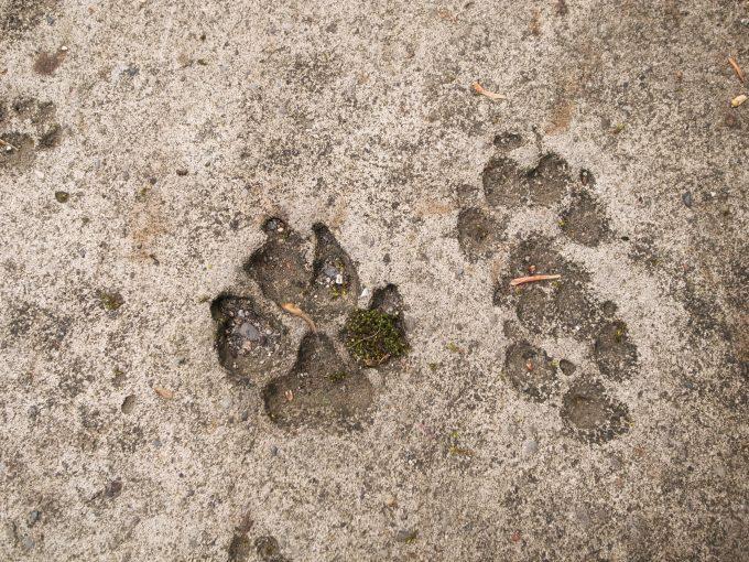 台湾の猫村のホウトンの犬のあしあと写真