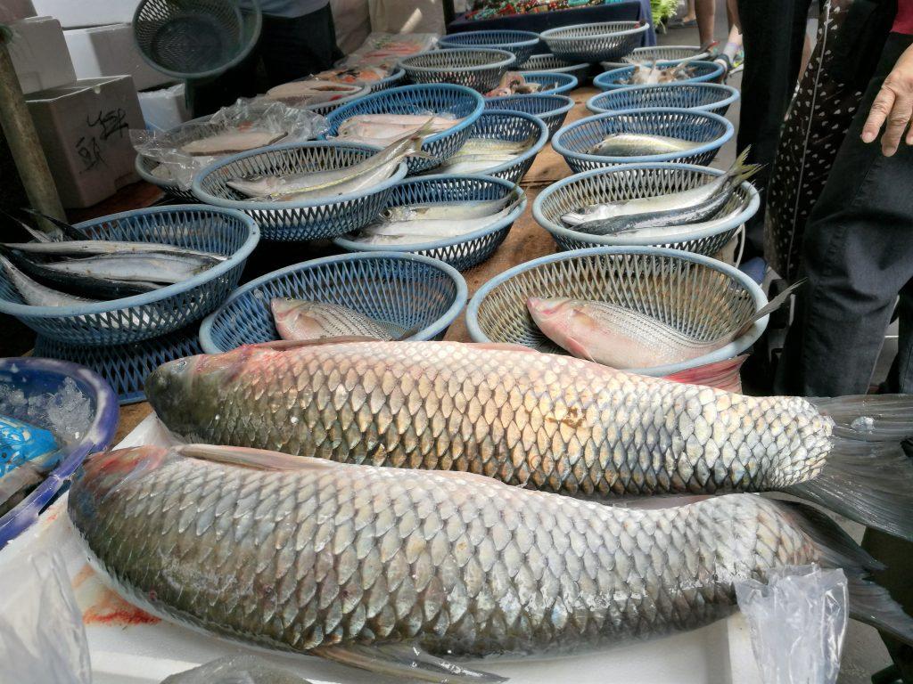 雙連朝市の魚の写真