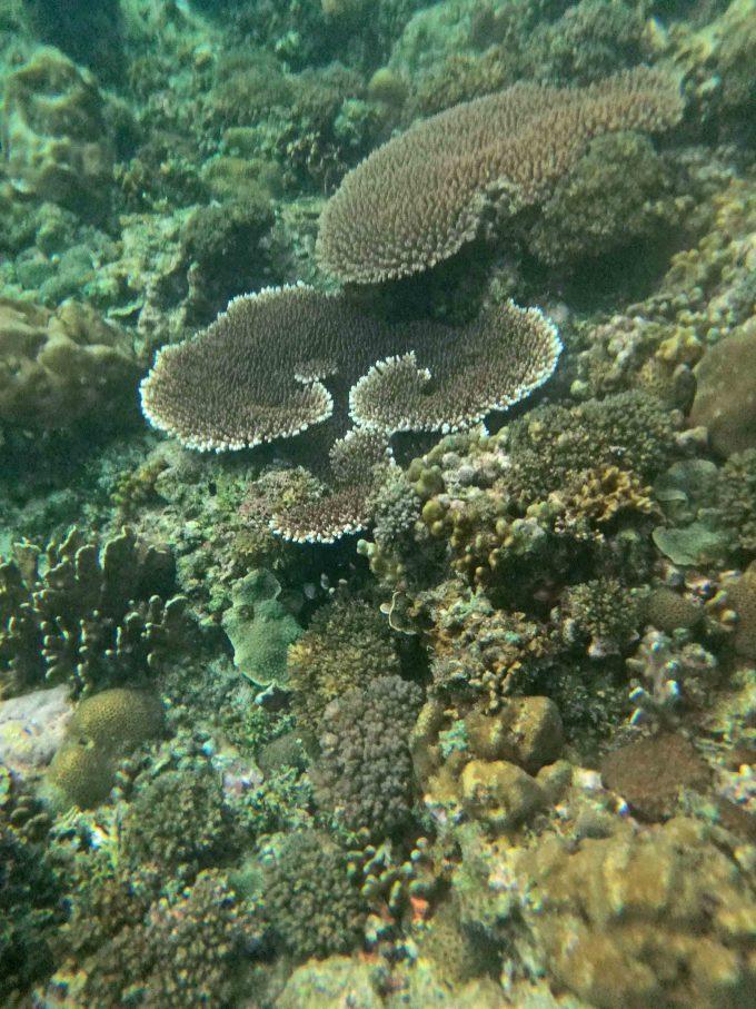 エルニドアイランドホッピングツアーCのサンゴ礁の写真