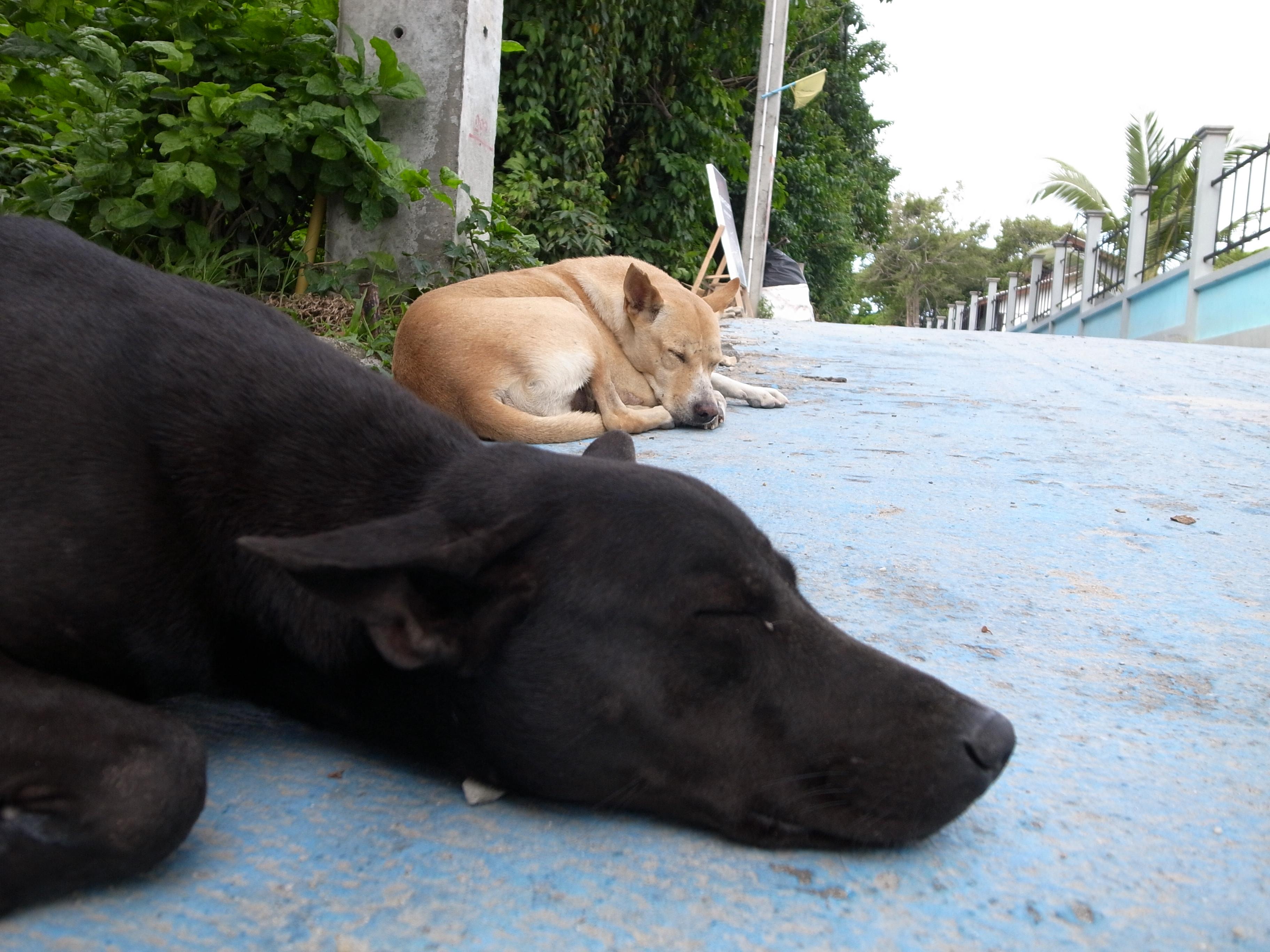 リペ島のお犬様の写真