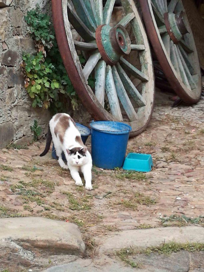 巡礼宿アルベルゲの猫の写真