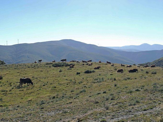 マンハリンを過ぎた放牧地帯の写真