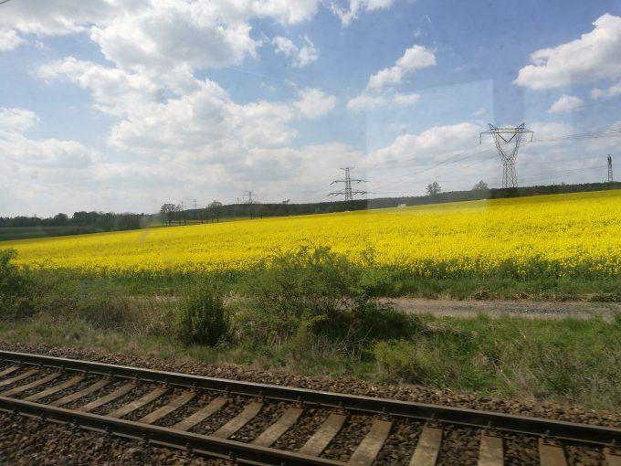 チェコの菜の花畑の写真