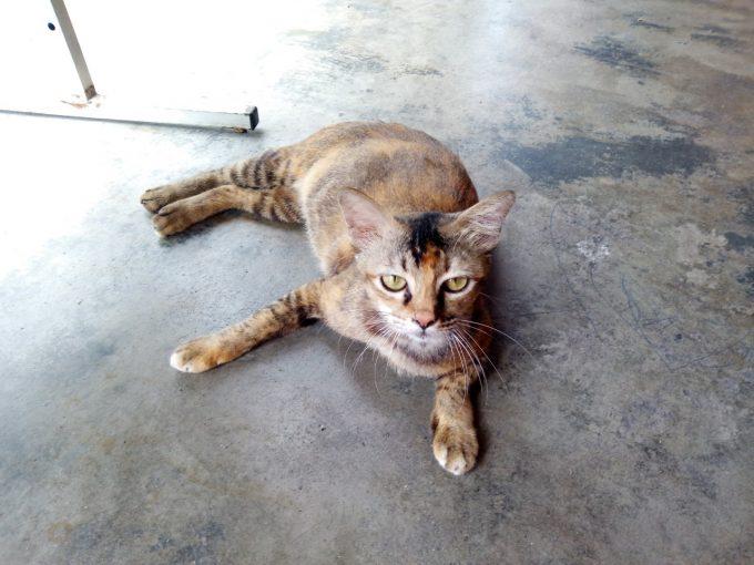 イポーの猫の写真