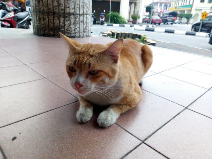 イポーのトラ猫の写真